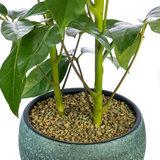 Plant met Zeoponic professionele grond